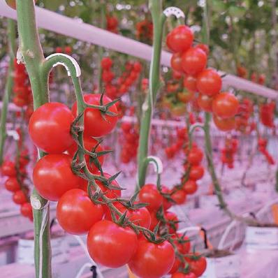 lampade ad induzione per settore agricolo