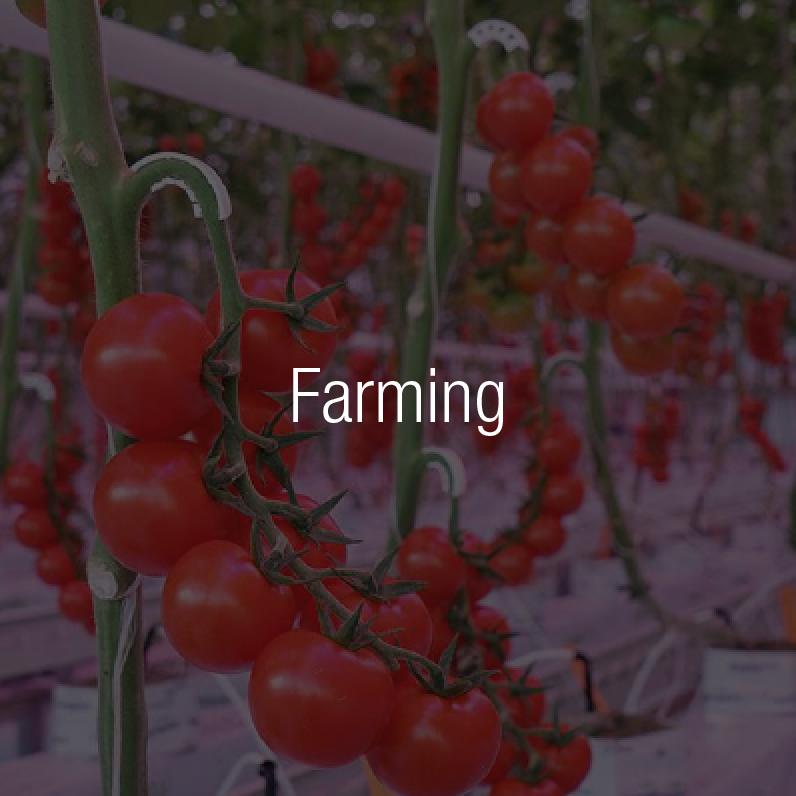 lampade ad induzione per agricoltura